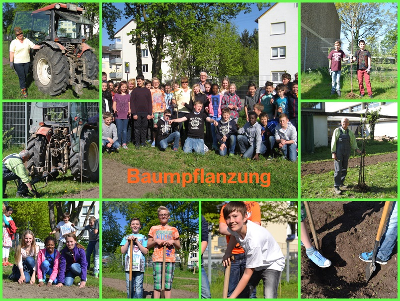Collage Baumpflanzung 2015